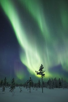 I've stood under the Northern Lights....one of the most amazing and beautiful things I've ever seen!  I miss Alaska!!