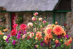 Cottage garden Birdhouse cool garden cottage garden so pretty English Country Gardens, Photos Voyages, Garden Cottage, Hollyhock, My Secret Garden, Flower Farm, Flower Photos, Dream Garden, Garden Inspiration