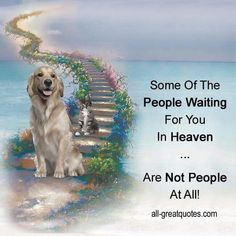 I hope with all my heart that my animals are there waiting for me!