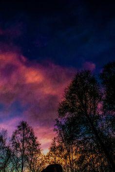Free stock photo of sky, trees, sunrise
