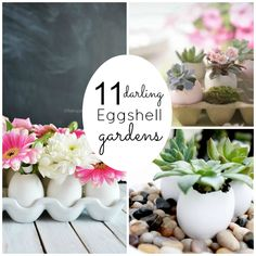 11 Darling Eggshell Gardens~    I have Herbs & Lemon Seed Starts in some Eggshells right now.  EggShells are Awesome Little Seed Starters!