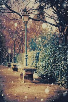 photography, snowy, winter, fall, autumn, street, bench, street lamp, city