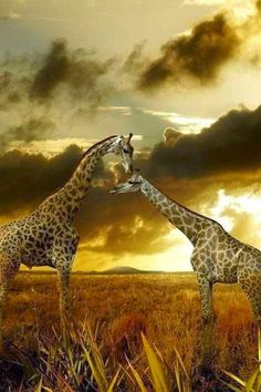 * * A GIRAFFE'S COFFEE WOULD BE COLD BY THE TIME IT REACHED IT'S THROAT. EVER THINK ABOUT THAT? NO, YOU ONLY THINK ABOUT YOURSELF. LOL