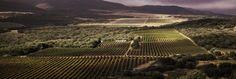 Los Terruños y Variedades de viñedos | Vivanco
