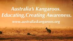 Join us at Australia's Kangaroos to be a voice against the ongoing slaughter & persecution of Kangaroos here in Australia✌🏽💜 #kangaroo #australia