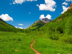 Aspen in Summer. So green and luscious
