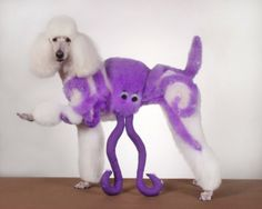 Poodle Octopus Hairstyle