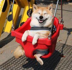 This Shiba Inu is enjoying a wonderful time. Shibe / Doge rule!