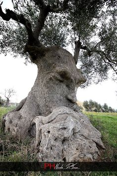 Thoughtful Olive Tree