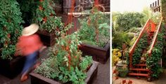 Love the red staircase with vines -- try scarlet runner beans?