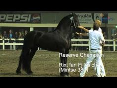 short video of the Central Mare Inspection Drachten 2011- the best-of-the-best Friesian mares competing