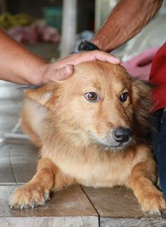 A 2-year-old dog named Pui saved the life of an abandoned baby on Monday in Thailand . The male dog found a plastic bag with a newborn baby girl inside and carried the infant back home, according to the Bangkok Post. It is believed that the baby was abandoned at a roadside dump.