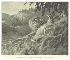 Kuvahaun tulos haulle hazel grouse art Grouse, Birds, Tattoo, Painting, Art, Art Background, Painting Art, Kunst, Bird