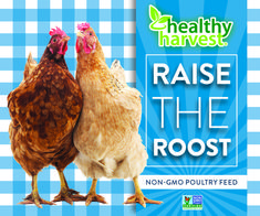 """Raising a flock of backyard chickens as pets with """"benefits"""" is a fun, fulfilling activity that the whole family can get involved in. Best Egg Laying Chickens, Baby Chickens, Raising Chickens, Keeping Chickens, Backyard Poultry, Chickens Backyard, Backyard Beekeeping, Organic Chicken Feed, Chicken Swing"""