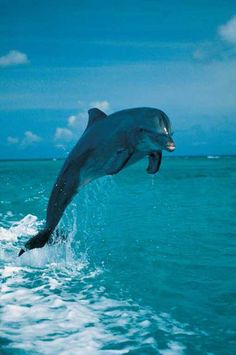 Dolphin Jumping - Uncyclopedia