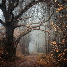 Late autumn forest