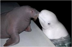 28 Pictures Of Animals Kissing That Will Brighten Up Your Day24