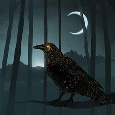 crows intrigue me