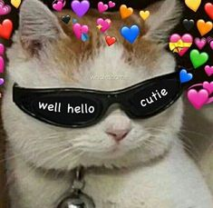 memes to send to your crush funny * memes to send to your crush ` memes to send to your crush freaky ` memes to send to your crush funny ` memes to send to your crush cute 9gag Funny, Funny Cats, Funny Animals, Funny Memes, Dog Memes, Funny Videos, Funny Quotes, Cute Cat Memes, Cute Love Memes