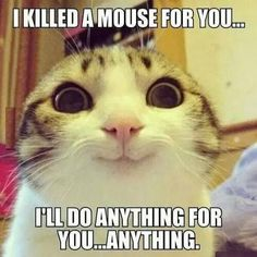 "The cat goes, ""I killed a mouse for you...I'll do anything for you...anything."""