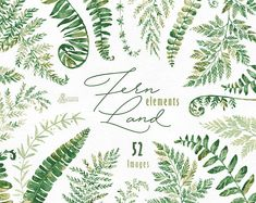 FernLand. Elements. Watercolor floral clipart separate ferns