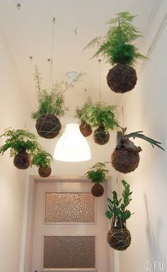 A garden to look: ... Kokedama plants by a thread ....