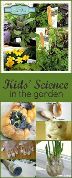 Kids' Science in the Garden...Fun ways to add even more science learning to your…