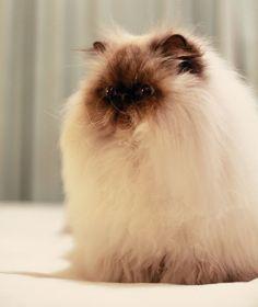 Soo fluffy!