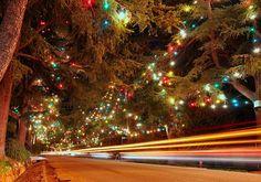 Christmas Tree Lane in Altadena, Photo by Aaron Kiley
