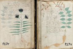 "Wilfrid Blunt and Sandra Raphael's ""The Illustrated Herbal"""