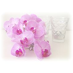 Orkide, orchids
