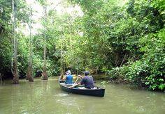 MANGLAR RIO SAN JUAN , NICARAGUA