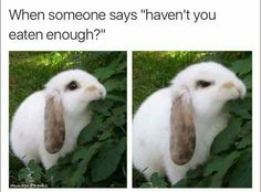 """40 Amusing Memes That'll Kick Boredom's Butt - Funny memes that """"GET IT"""" and want you to too. Get the latest funniest memes and keep up what is going on in the meme-o-sphere. Animal Jokes, Funny Animal Memes, Cute Funny Animals, Funny Relatable Memes, Funny Animal Pictures, Cute Baby Animals, Funny Cute, Funny Jokes, Bad Day Funny"""