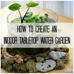 Make Your Own Stunning Indoor Tabletop Water Garden #watergarden