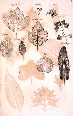 Stephen Martin Leake (1702-73) made a volume called Impressions of Leaves, with samples gathered from his garden in Mile End in London.
