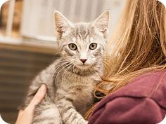 Meet Silver, a kitten for adoption at East Lake Pet Orphanage. Admitted to #ELPO on 10/27/2014.