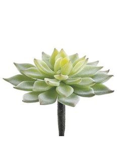 Faux succulents for creative DIY projects. Artificial succulents and air plants offer the realism with no maintenance required, find mini succulents to purple fake succulents and cactus. Fake Cactus, Artificial Cactus, Artificial Succulents, Artificial Flowers, Fake Flowers, Silk Flowers, Dried Flowers, Silk Plants, Fake Plants