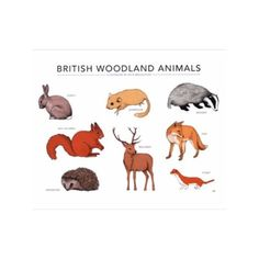 British Woodland Animals Print (59 AUD) ❤ liked on Polyvore featuring home, home decor, wall art, fox wall art, british wall art, british home decor, deer home decor and deer wall art
