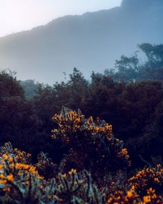 Dewy spiderwebs on gorse. Are your spiderwebs dewy these days (not a euphemism you weirdo)? Sweet baby leaprechauns I'm loving these Autumnal mornings. ____________________________ #ireland #artofvisuals