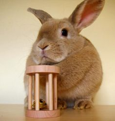 And we like rolling fings too  Toys - Bunny Supplies Store by Ross Rabbits - for all your bunny needs!