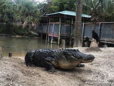 Wild Florida em Orlando