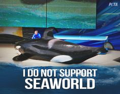 SeaWorld puts black sunscreen on orca's to hide BURNS & BLISTERS pic.twitter.com/AKid4Bx82i http://www.seaworldofhurt.com/features/ten-things-didnt-know-seaworld/ …