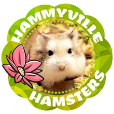 Fun beautiful hamster chat stickers in English and Japanese. Enjoy the cutest pet hamster stickers in chats with friends and families. Roborovski Hamster, Hamster Names, Cute Hamsters, Line Store, Line Sticker, Cool Pets, Cute Animals, Japanese, Stickers