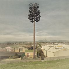 Invasive Species by Dillon Marsh        In 1996 a palm tree appeared almost overnight in a suburb of Cape Town. This was the world's first ever disguised cell phone tower.        Since then, these trees have spread across the city, South Africa and the rest of the world. Invasive Species explores the relationship between the environment and the disguised towers of Cape Town and its surroundings. Fake Trees, South African Artists, Photo Series, Rest Of The World, Love Photography, Installation Art, Art Installations, Landscape Architecture, Locs