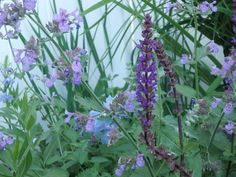2015 late June, blueness