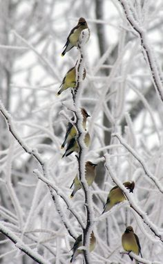 winter birds -- [REPINNED by All Creatures Gift Shop]