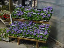 Folding Step Bench Display | Bench Garden Center Display - Wood Display Products - Step Bench Display and Garden Center Step Bench Display - 335 & 336 - Folding Step Benches - Bench Systems