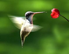 hummingbirds make me think of my mom:)