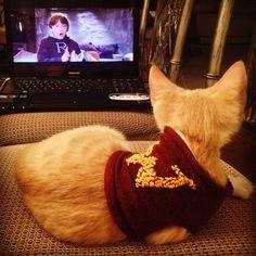 New kitten, must be a Weasley