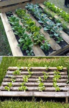 Smart DIY gardening ideas on pallets Smart DIY gardening ideas on pallets Look how wonderful … Let's see how to make a pallet garden. See also the best ideas to have a beautiful and creative vegetable garden at home. Home Vegetable Garden, Herb Garden, Garden Beds, Gardening For Beginners, Garden Projects, Diy Projects, Garden Landscaping, Garden Design, Diys